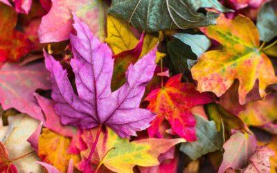 El otoño y su influencia en nuestro estado de ánimo